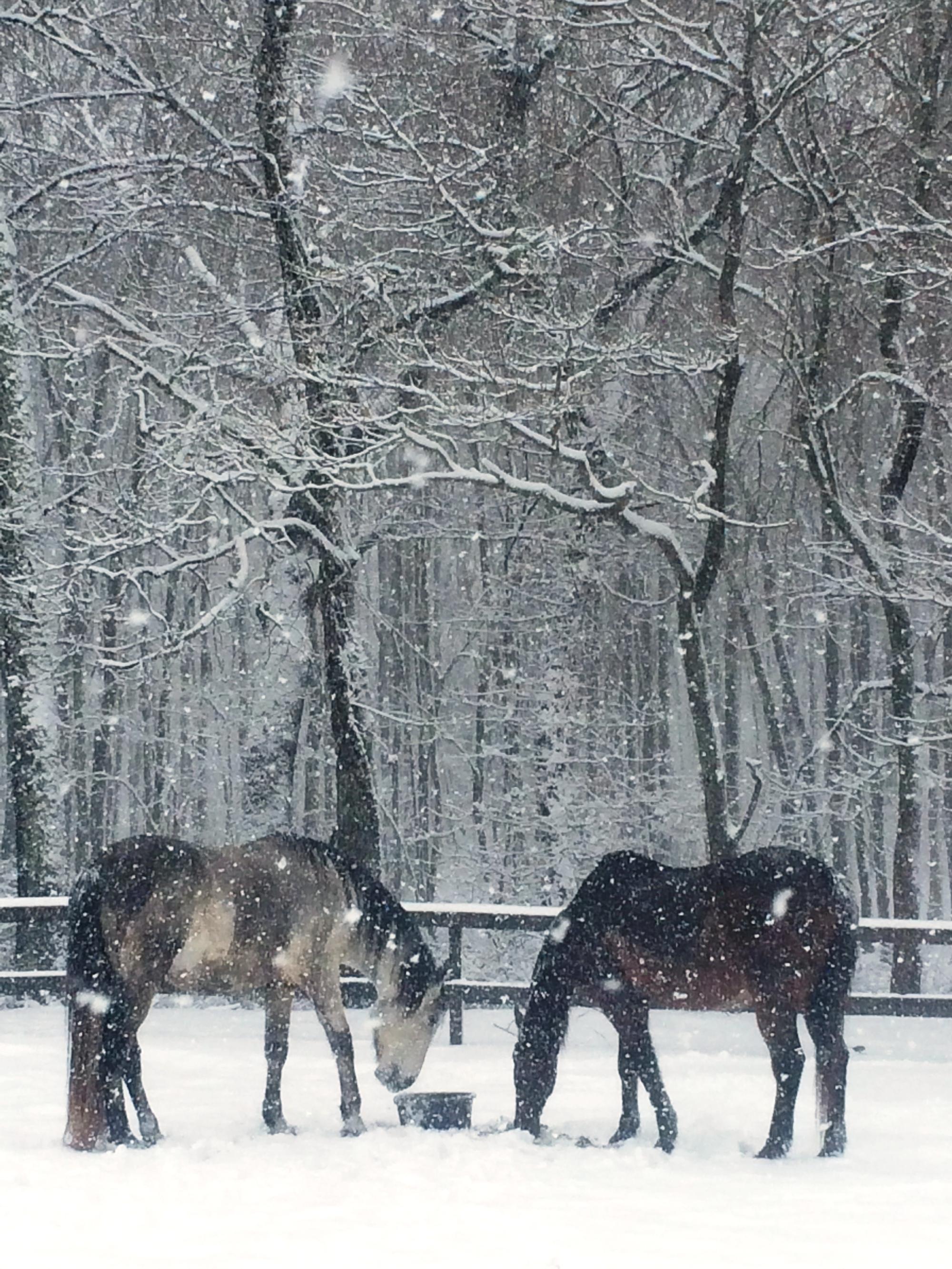 UNBRIDLED The Heart of Graceful Horsemanship